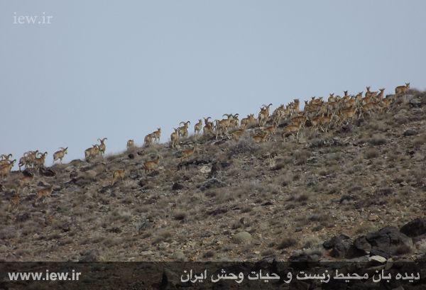 پاسخ مقدری به شبهات مشاور استاندار اصفهان درباره واگذاری معدن تراورتن میمه (موته)
